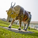 """Cow Gone Wild"" sculpture at the Cummings School of Veterinary Medicine at Tufts"