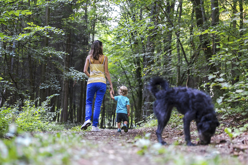 Young mother and her toddles son on a walk in beautiful woods with their black dog.